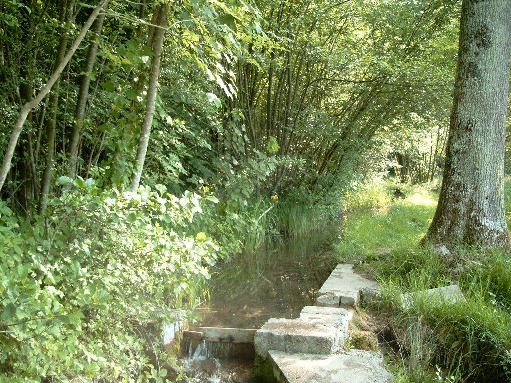 Sentier botanique à Saint Remy